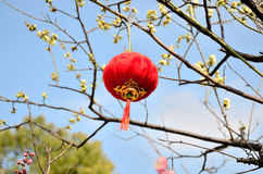 Red Lantern. With blue sky Stock Image
