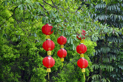 Red lantern. Branches three rows of red lanterns hanging Stock Photography