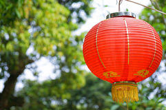 One Red Lantern on Green garden. Red Lantern in the garden Royalty Free Stock Photo