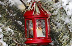 Red lantern hanging on fir branch Royalty Free Stock Photography