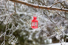 Red Lantern. Hanging on an icy tree in winter Royalty Free Stock Photography