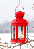 Red lantern hanging on the tree Royalty Free Stock Images