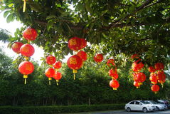 Red lantern hanging in the trees Stock Image