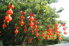 Red lantern hanging in the trees Stock Photography