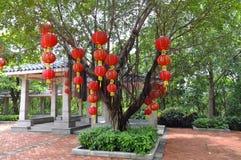 Red Lantern. A lush dense trees hanging red lanterns Stock Image