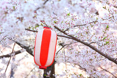 Red lantern and sakura Stock Photos