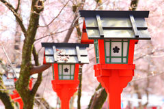 Red lantern with sakura tree Stock Image