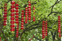 Red lanterns. Bunches of red lanterns with chinese characters ganged on the branches of a tree Stock Photography
