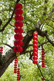 Red lanterns. Bunches of red lanterns with chinese characters ganged on the branches of a tree Stock Images
