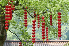 Red lanterns. Bunches of red lanterns with chinese characters ganged on the branches of a tree Royalty Free Stock Image