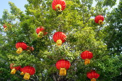The red lanterns hanging in a tree Stock Photo
