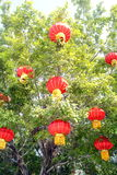 The red lanterns hanging in a tree Stock Images