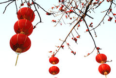 Red lanterns and kapok. Red lanterns hung on the ceiba tree to celebrate the spring festival,spring flowers of kapok Stock Photography