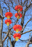 Red lanterns on the tree Stock Photos