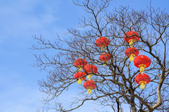 Red lanterns on tree Stock Image