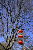 Red lanterns on the tree Stock Photo