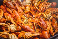 Red large boiled crayfish in hot and apetized cauldron is steam Royalty Free Stock Photos