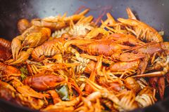 Red large boiled crayfish in hot and apetized cauldron is steam royalty free stock photography