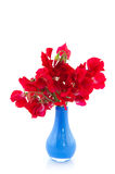 Red lathyrus Royalty Free Stock Image