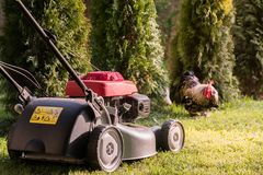 Lawn mower cutting grass Stock Photography