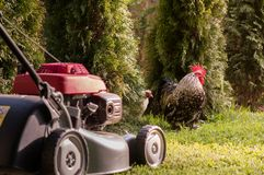 Lawn mower cutting grass Royalty Free Stock Photos