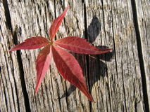 Red leaf. A red leaf and a wood stock photos