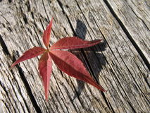 Red leaf. A red leaf and a wood stock images