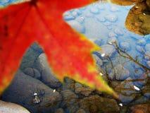 Red leaf Stock Image