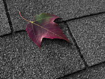 Red leaf on asphalt shingles Royalty Free Stock Photos