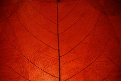 Red Leaf Background Royalty Free Stock Photography