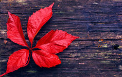 Red leaf on board Stock Photos
