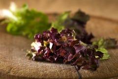 Red leaf coral lettuce Stock Image