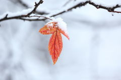 Red leaf covered with snow Royalty Free Stock Images