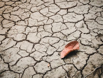 Red leaf on cracked dry soil of a barren land Stock Image