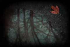Red leaf in a dirty puddle Royalty Free Stock Image