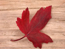 Red Leaf Fall. Lovely red leaf on colorful wood. Simple expression of Fall or Seasonal applications, cycles of life, sweet colors and more Stock Photos