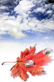 Red leaf and few glass waterdrops. Autumn red leaf and few glass waterdrops in a desert under the sky Stock Photos