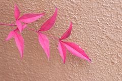 Red leaf in front of colorful red wall stock photo