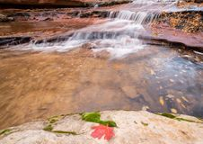 Red leaf and green moss on boulder near waterfall royalty free stock photos