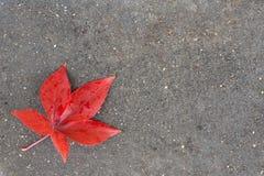 Red leaf on the ground. Red maple leaf on the asphalt stock illustration