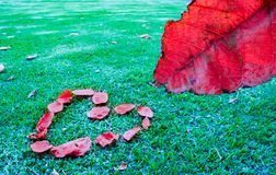 Red Leaf and Heart. On green grass. Romatic and lovely nature. Cold day stock image
