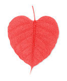 Red leaf heart  isolated on white background Stock Photos