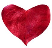 Red leaf heart shaped. Valentine`s Day concept Stock Images