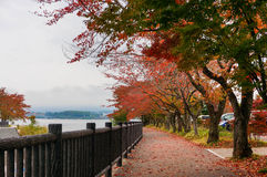 Red leaf in Japan (before autumn). This picture was taking at Fuji before autumn royalty free stock images
