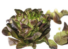 Red leaf lettuce Stock Photos