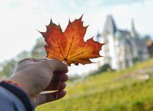 Red leaf of maple in male hand. With ancient castle in Luzern, Switzerland stock photos