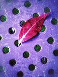 Red leaf on a metal surface Royalty Free Stock Photography