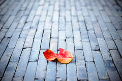 Red leaf on nature stone brick Royalty Free Stock Photos