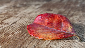 Red leaf. On an old wooden base Stock Images