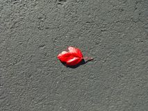 A red leaf on the pavement Royalty Free Stock Image